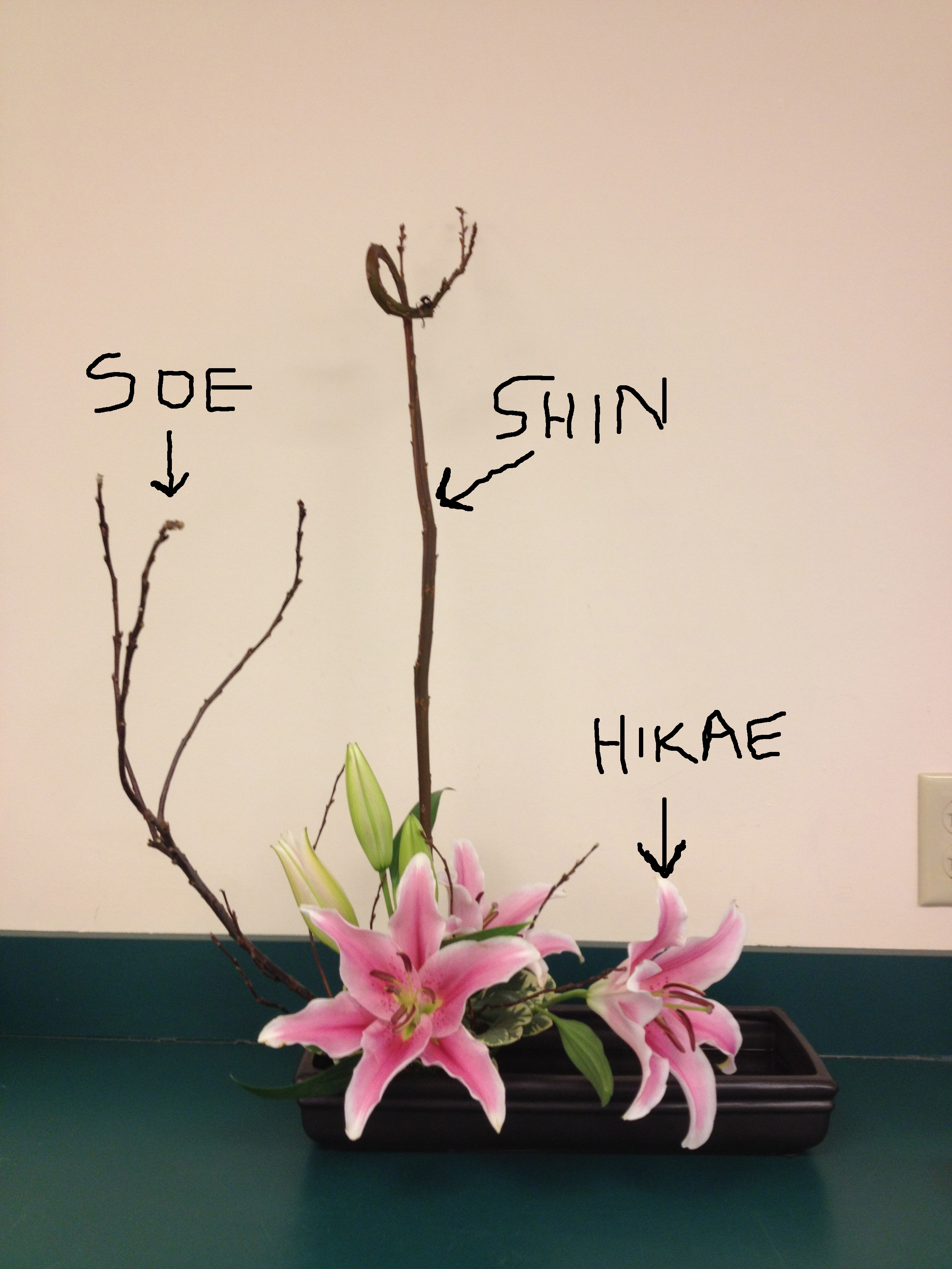 Ikebana | roots to blooms