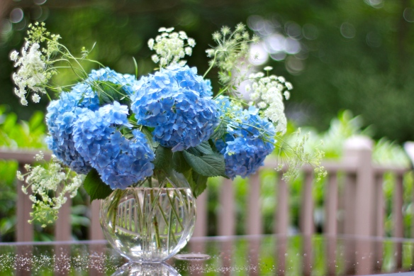 Simple design using hydrangea from yard and Queen Anne's lace grown from seed