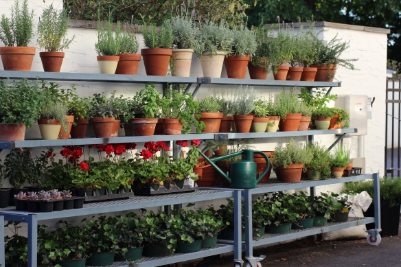 I maintained many container herbs and flowers throughout the year.